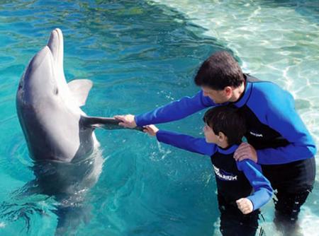 Dubai Dolphinarium - Dolphin Planet